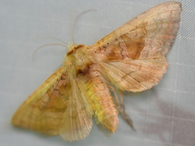 Specimen Image